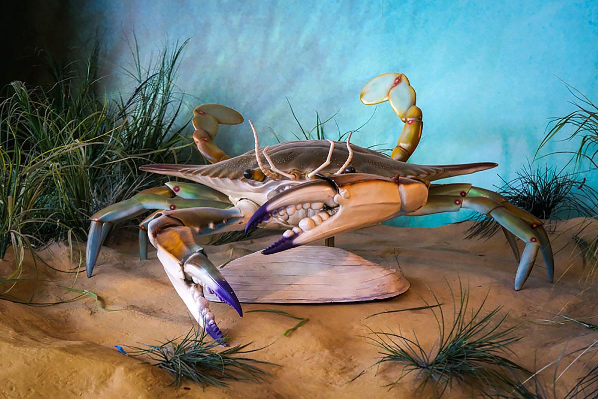 Crab.center цена кв 5