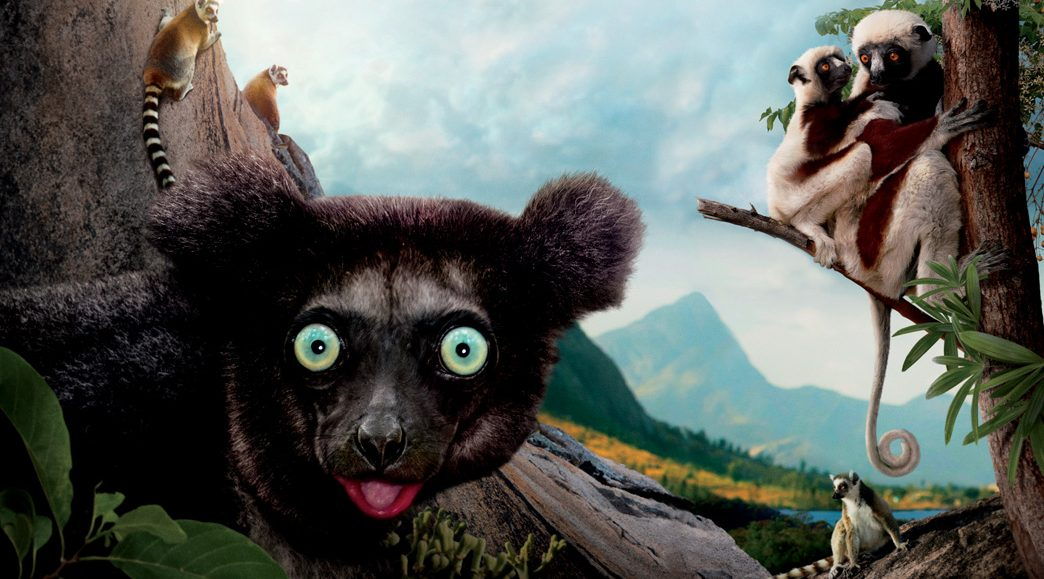 Aye-aye: Worlds largest nocturnal primate - Save Our Green
