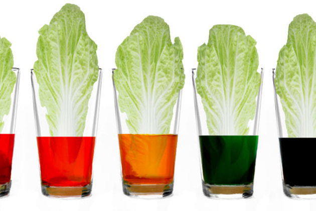 Friday Workshops - Cabbage leaves in different colored liquids